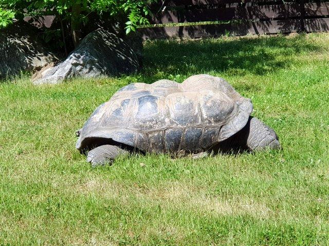 Гигантские черепахи. Это сейшельская