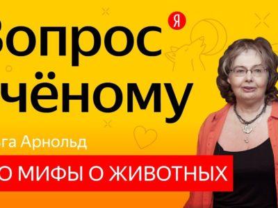Ответы на вопросы о мифах о животных. Яндекс-ролик
