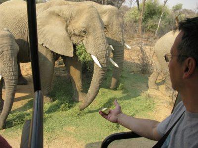 Намибийские слоны. Новые статья и фотогалерея