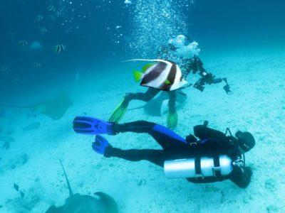 Подводные Мальдивы. I часть, без акул и скатов