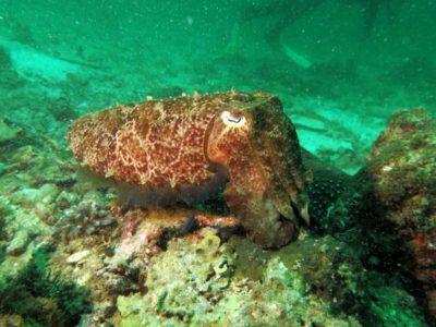 Каракатицы. Новые  статья и фотогалерея на сайте